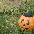 halloween solar light