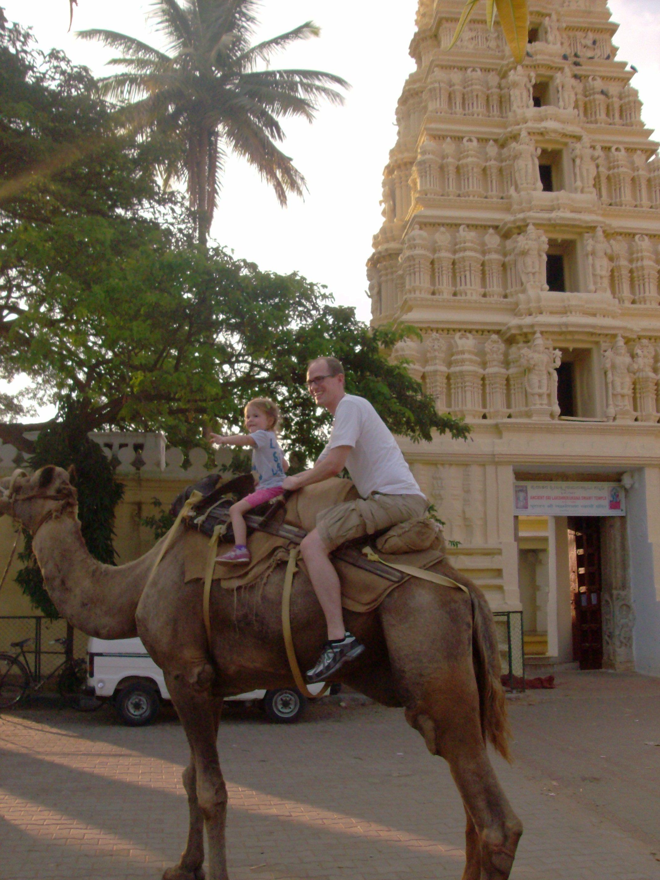 Mysore Camel Ride